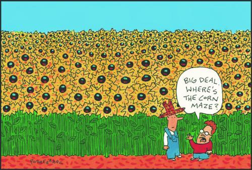 independent-sunflower field